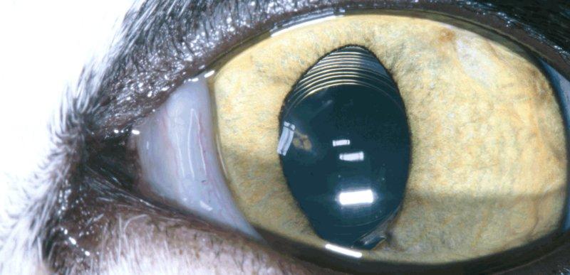 Notfälle am Auge